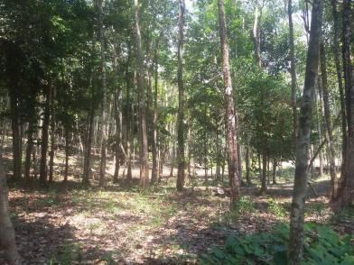 Jungle Camping Site 1