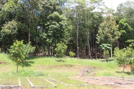 Jungle Camping Site 2